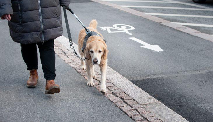 Ulla Jensen går på gatan med sin ledarhund Nisse.